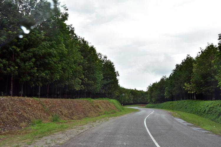 Vizara Rubber Plantation