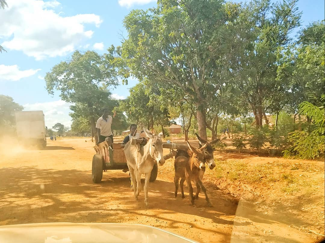 Donkey cart in Ntchisi